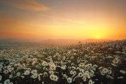 Sunrise and Daisies