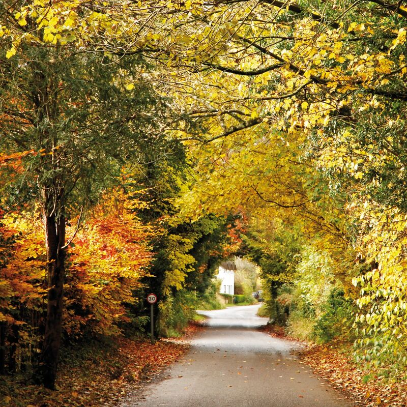 A tunnel of autumn leaves, Stockton