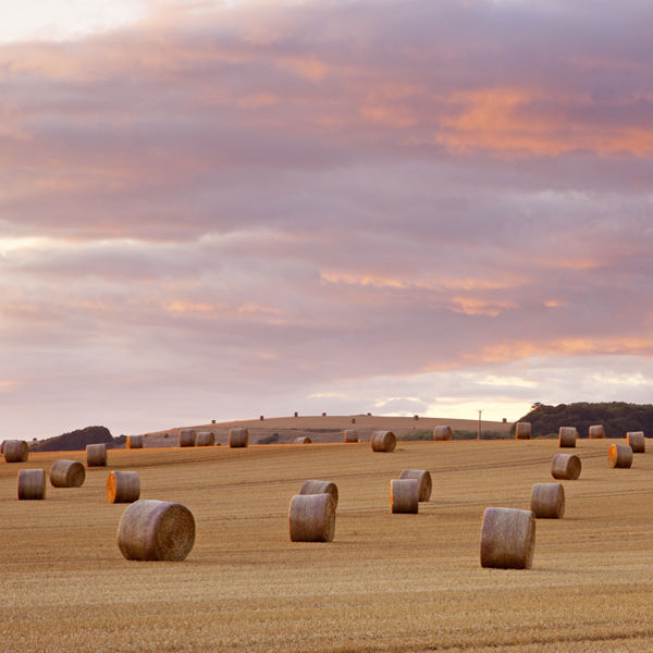 Straw bales, Tytherington