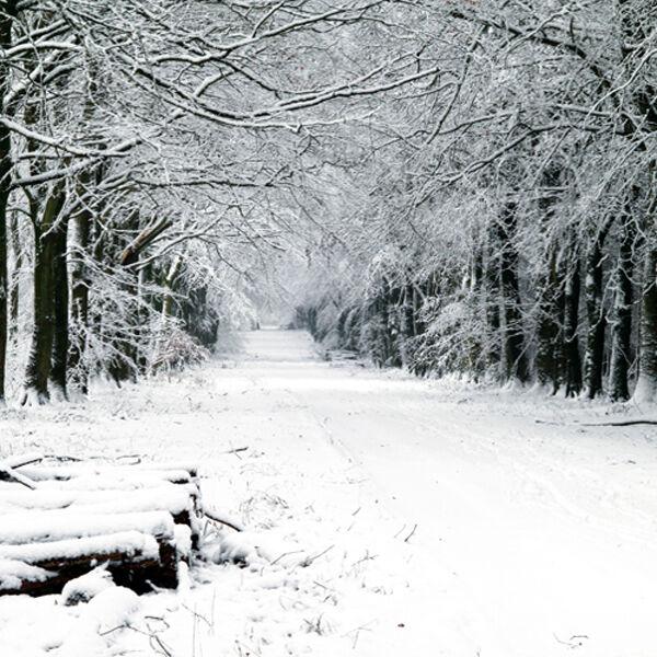 Snow in Grovely