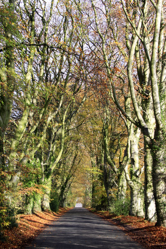 Avenue, Woodminton Down