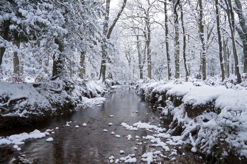 Amberwood Snow