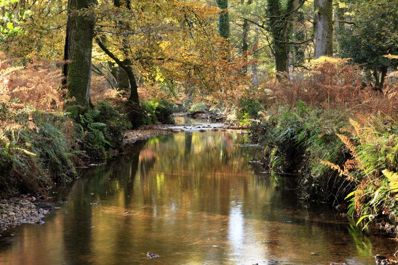Latchmore Brook