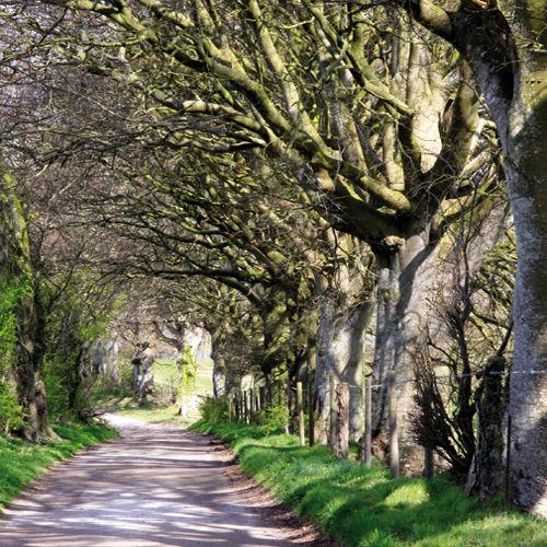 The Wessex Ridgeway, Corton Hill