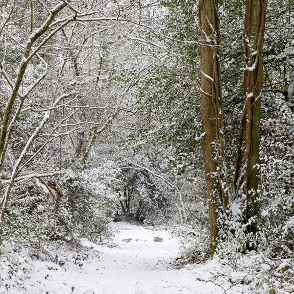 Whitmarsh Wood