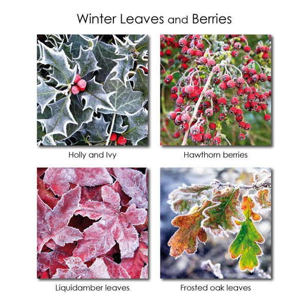Winter Leaves and Berries