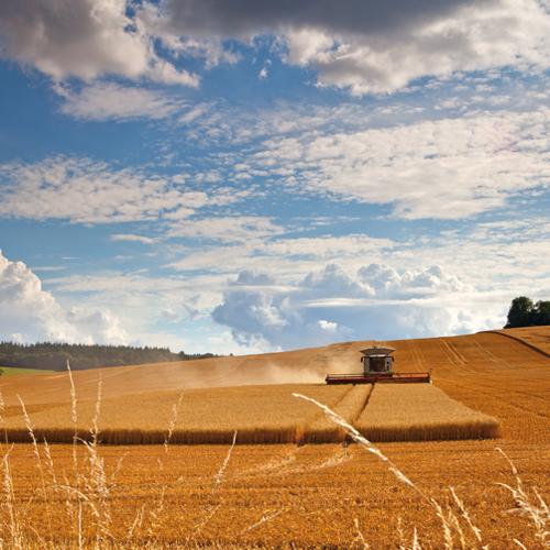 Harvest, Great Wishford