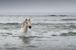Camargue White Horses (11 of 15)