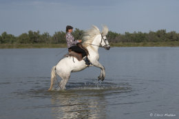 Camargue White Horses (14 of 15)