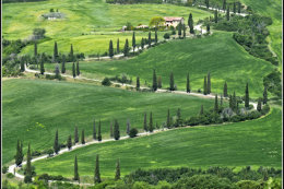 Tuscany (1 of 8)