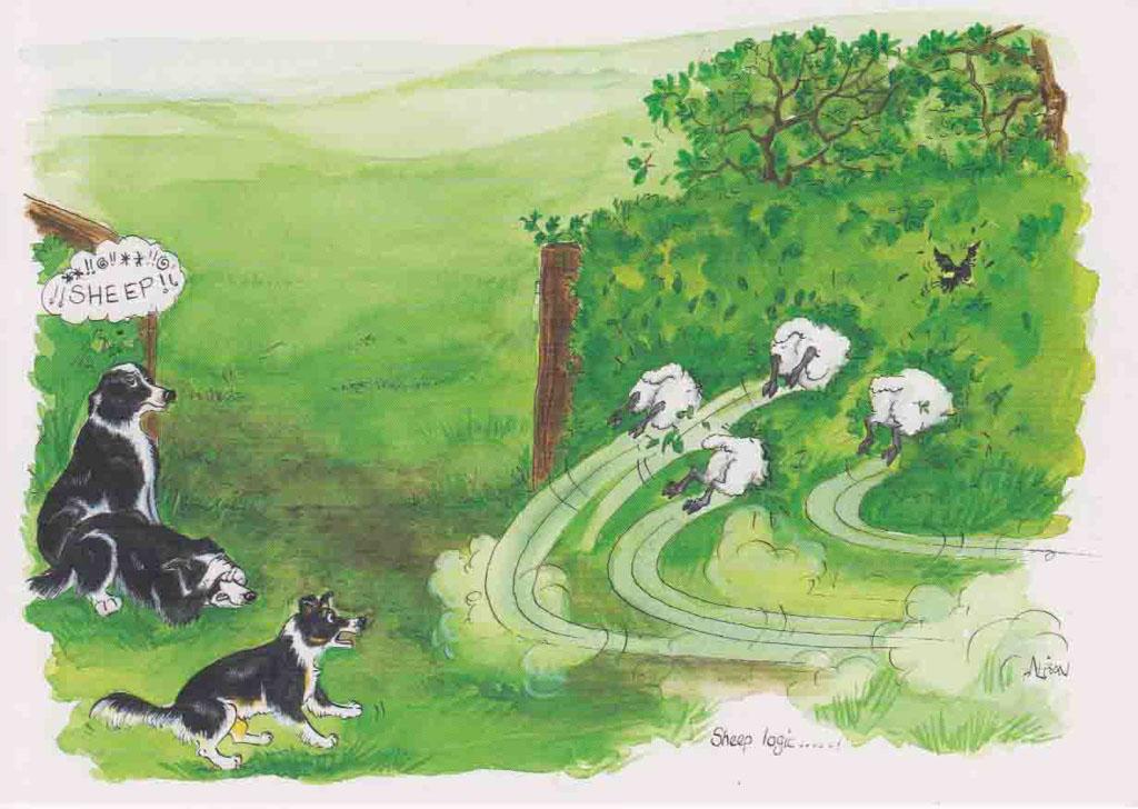 AF105 - Sheep logic ...!