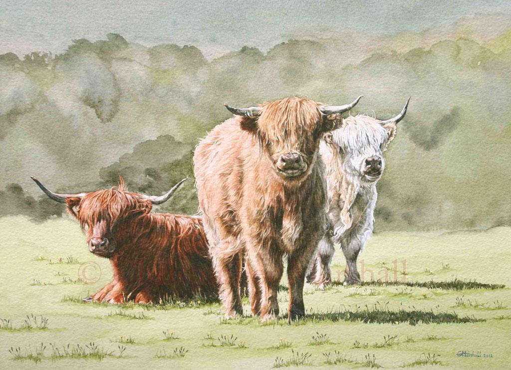 CHC - Highland Cows