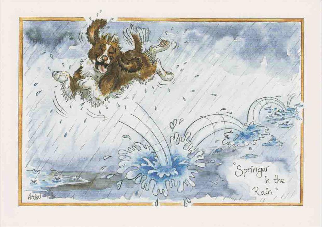 D115 - Springer in the rain!