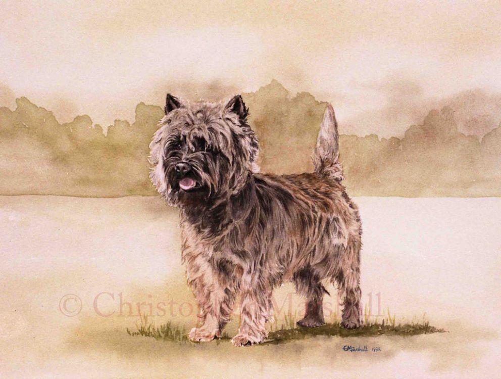 DCT - Cairn Terrier