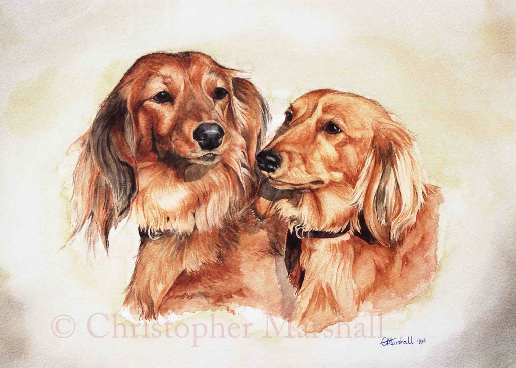DDS1 - Long-haired Dachshund