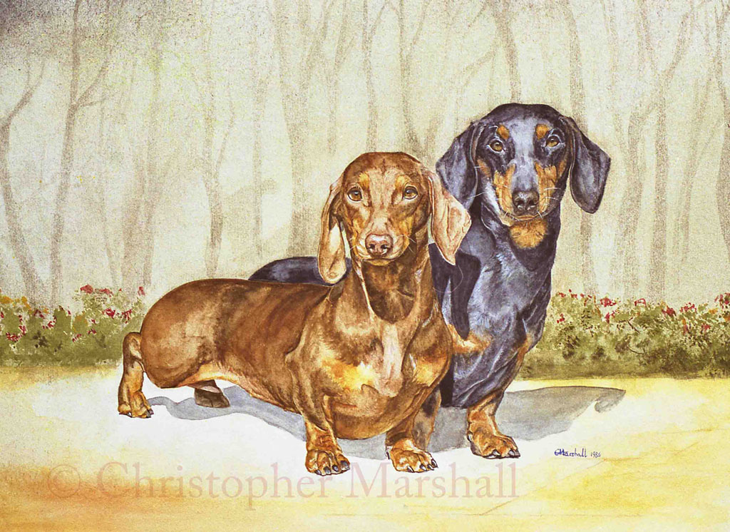 DDS2 - Smooth-haired Dachshund