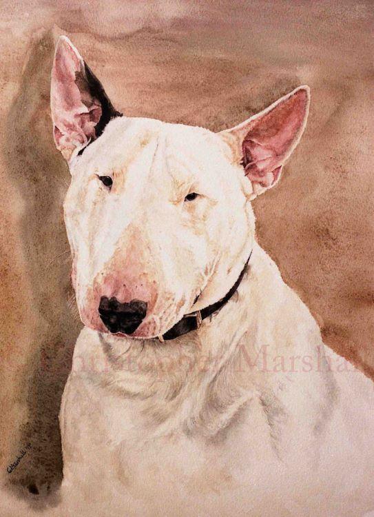 DEB - English Bull Terrier