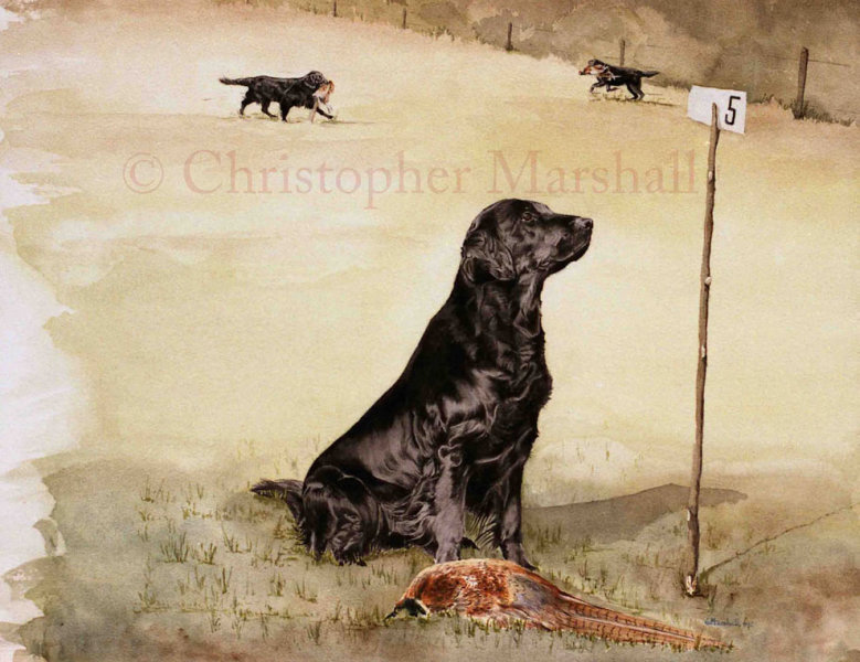 DFC12 - Flat Coat Retriever