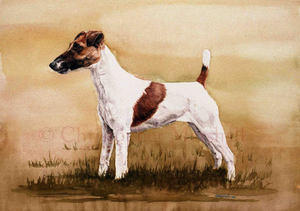 DFT - Fox Terrier