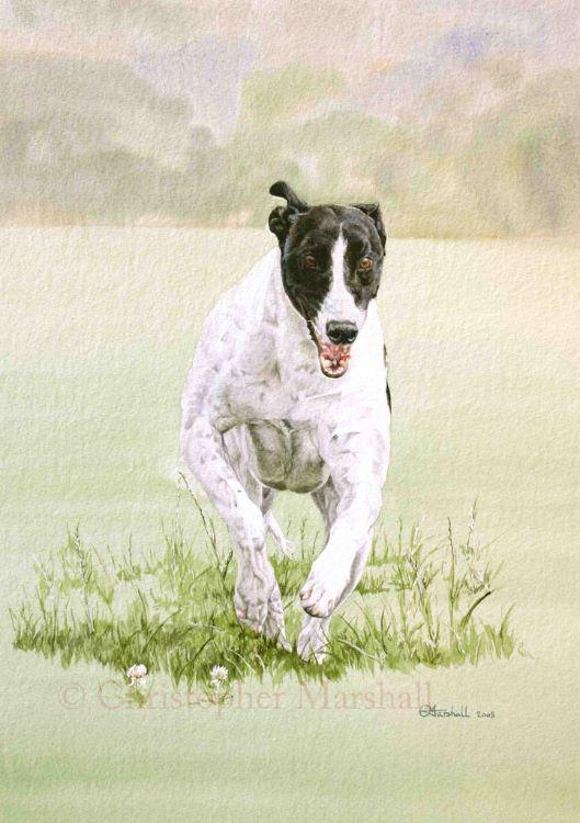 DGH - Greyhound