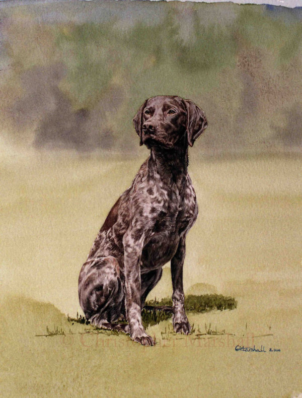 DGSP2 - German Short-haired Pointer