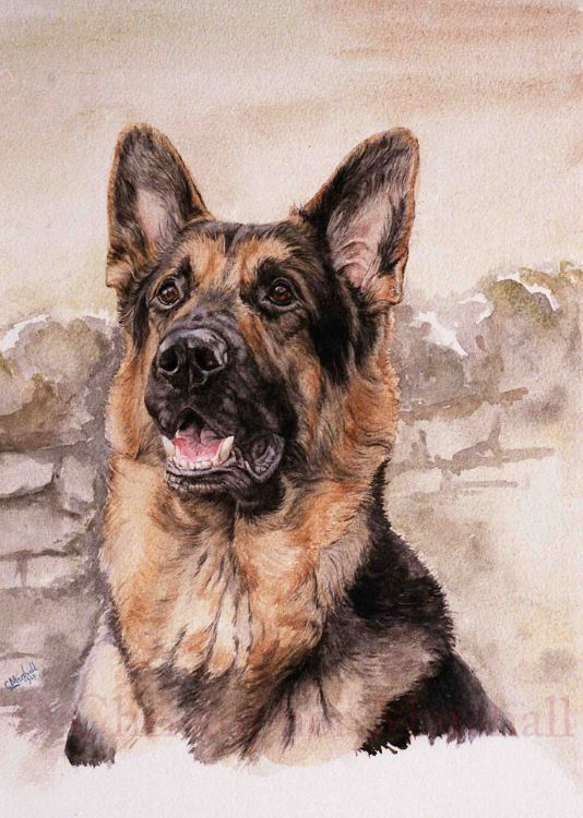 DGS - German Shepherd
