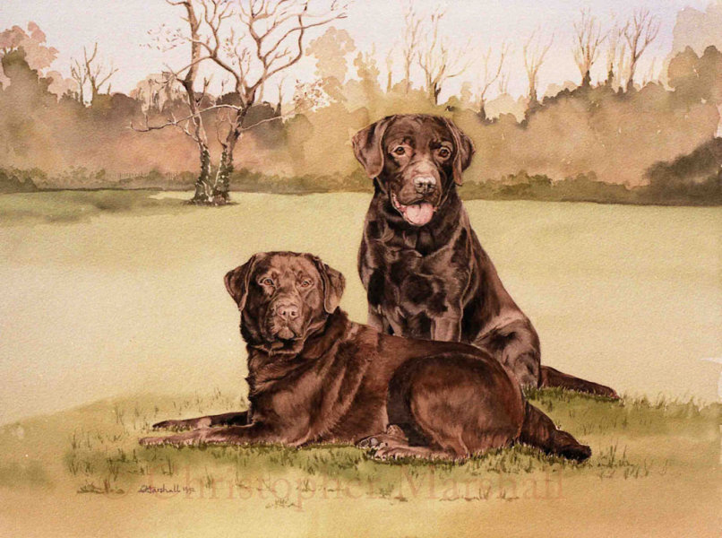 DLR12 - Labrador Retriever