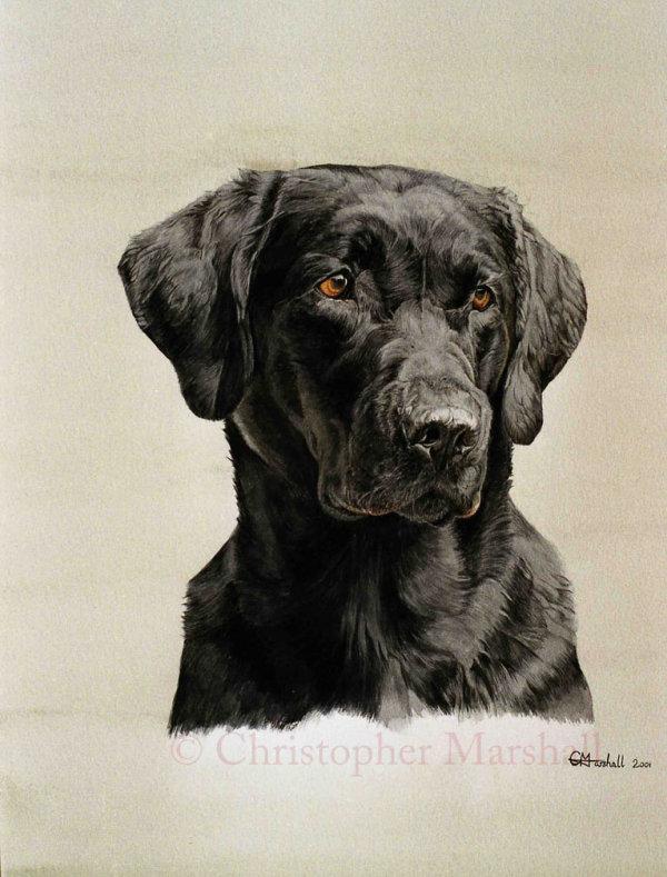 DLR1 - Labrador Retriever
