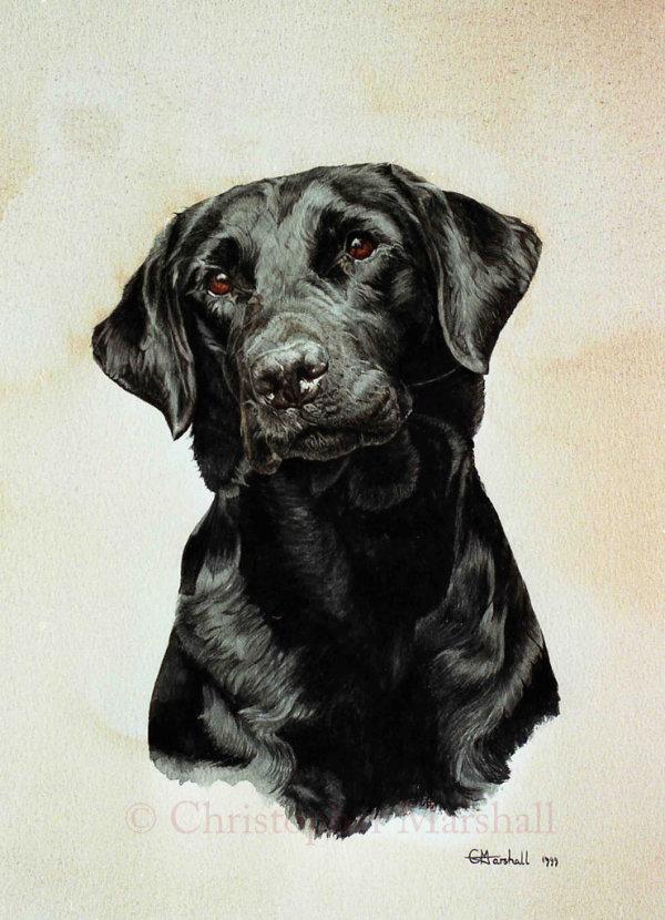 DLR4 - Labrador Retriever