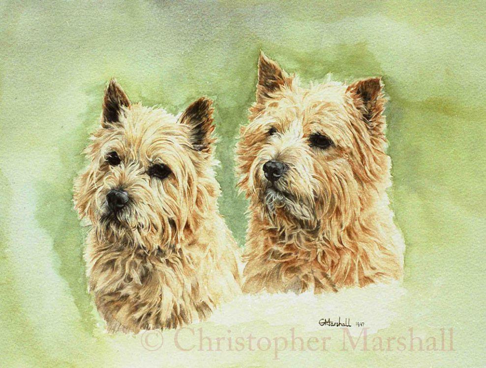 DNT - Norwich Terriers
