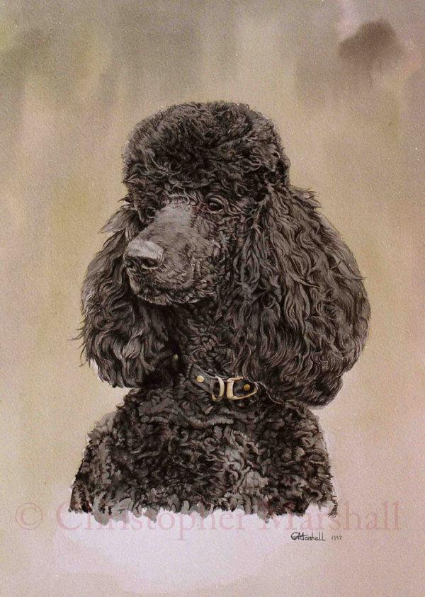 DPL - Poodle