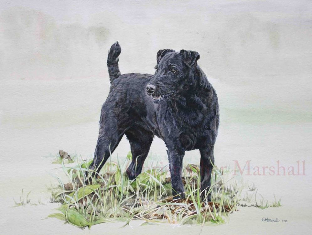 DPT1 - Patterdale Terrier