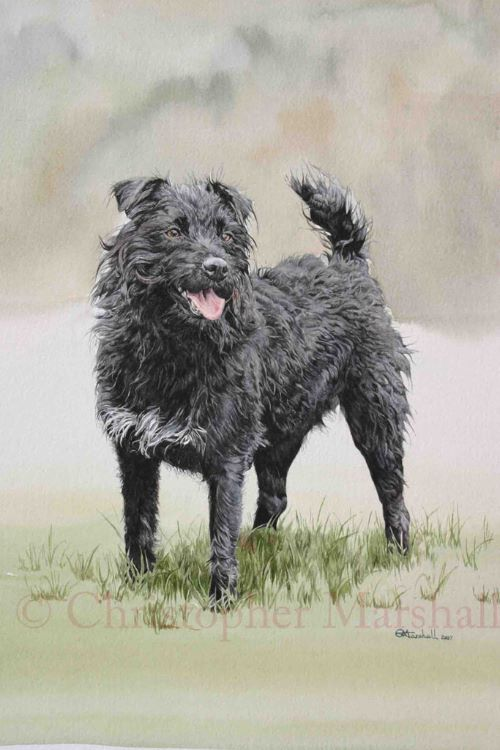 DPT2 - Patterdale Terrier