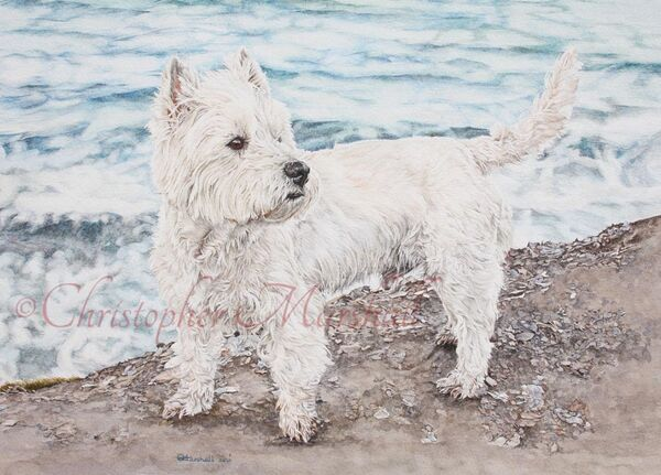 DWH1 - West Highland White Terrier