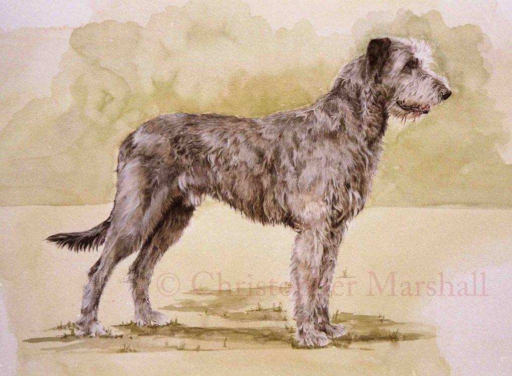 DWH - Wolfhound
