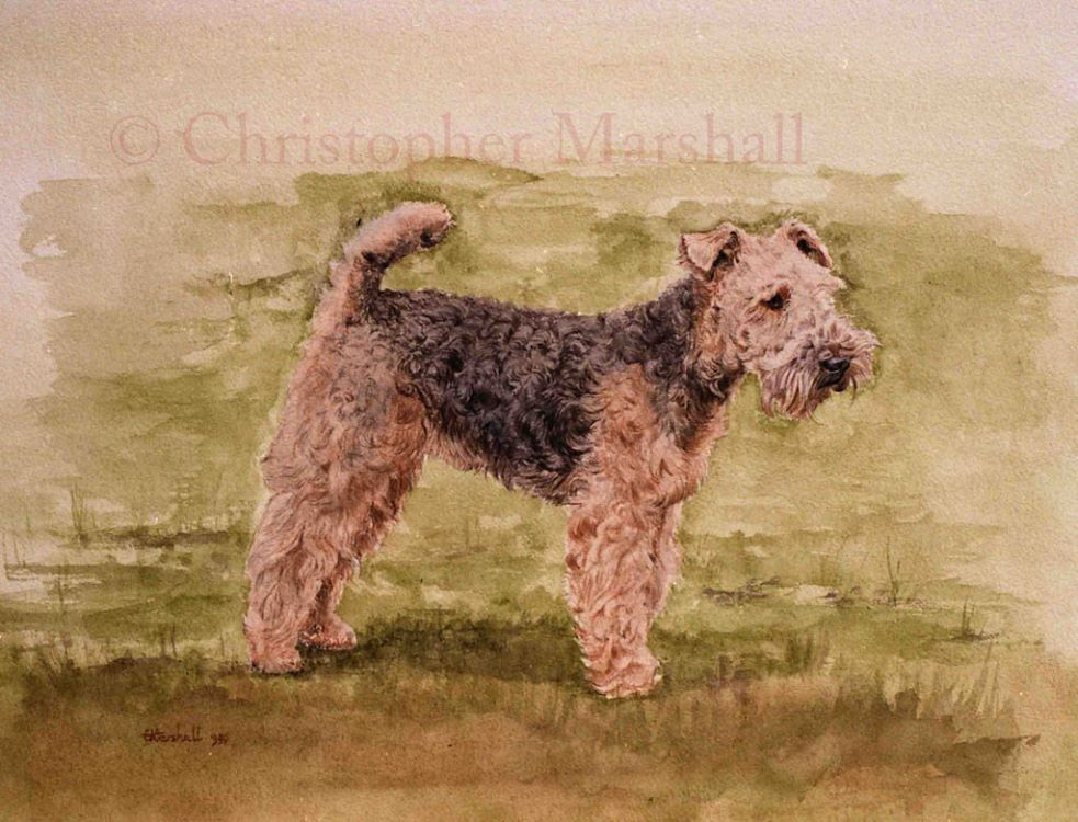 DWT - Welsh Terrier