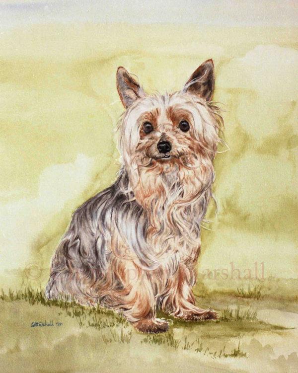 DYT - Yorkshire Terrier