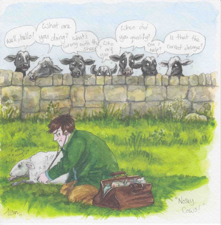 JH02 - Nosey cows!