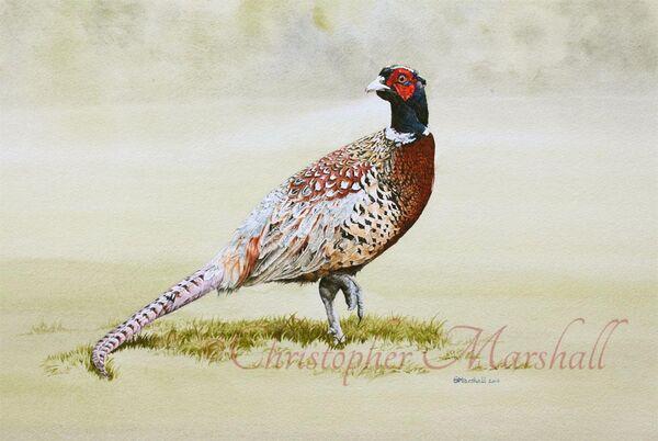 PP - Pheasant