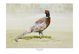 Pleasant Pheasant
