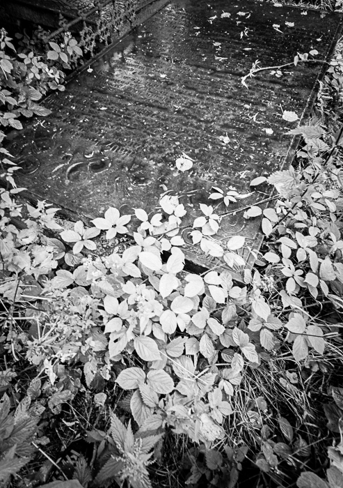 The murder grave
