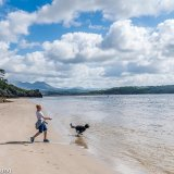 Boy playing skimmers with dog on beach
