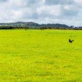 Dog in summer field