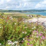 Wildflowers and coast