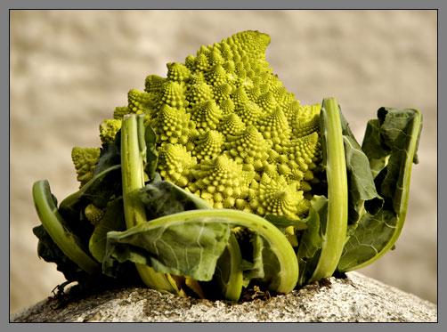 """Cauliflower """"Romanesco"""""""