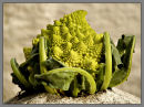 "Cauliflower ""Romanesco"""