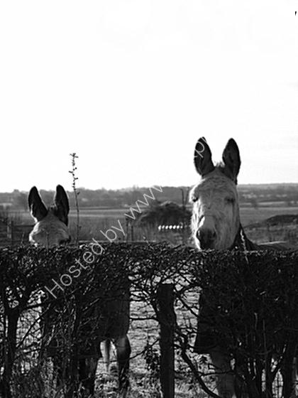 nosey donkeys