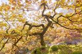 Autumn, Elan Valley, Wales, UK.