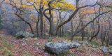 Autumn Oaks, Near Penderyn, Brecon Beacons, Wales.