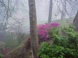 Beechwood Park, Newport City, Wales.